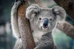 Image result for wild animals photos