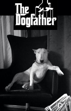 The dogfather!!