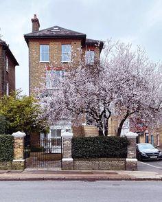 Skye 📍 London (@skyeoneill) • Instagram-bilder og -videoer South London, London England, Seasons, Mansions, House Styles, Instagram, Waiting, Homes, Magnolias