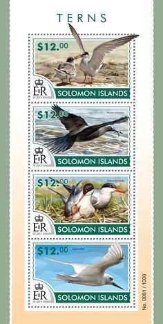 Post stamp Solomon Islands SLM 15307 a	Terns (Sternula albifrons, Anous minutus, Sterna hirundo, Gygis alba)