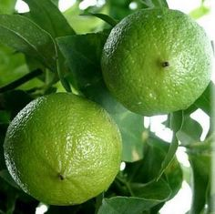 Bergamot Fragrance Oil - Bright and uplifting, this is a crisp, clean scent on a light floral background.