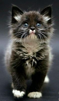 Real Cute Kittens For Sale every Cute Cat Gem Names Cute Fluffy Kittens, Kittens Cutest Baby, Kittens And Puppies, Cute Cats And Kittens, Adorable Kittens, Pretty Cats, Beautiful Cats, Animals Beautiful, Beautiful Creatures