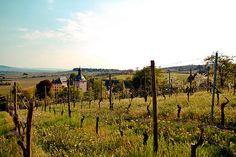 Beautiful Rheingau