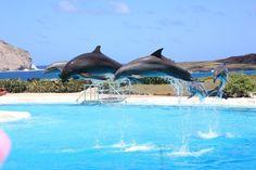 Sea Life Park // Location: Waimanalo, Hawaii (Oahu)