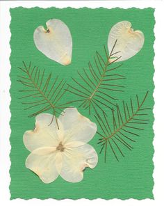 Pressed flowers Greeting Card  Real flower card by SmileWithFlower
