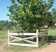 A nice fence around your tree to protect it from horses. Even so you might need to electrify it as horses will rub anywhere.