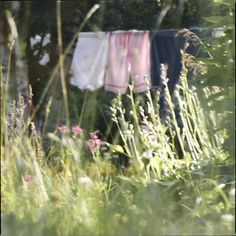 I thought this was a pretty picture. Clothes hanging on a clothesline reminds me of my Nana. <3