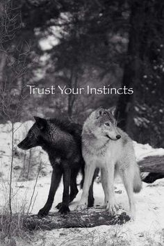Trust your instincts. It's the universe inspiring you. What are your instincts telling you to do? www.thesecret.tv