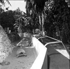 Crandon Park Zoo - Miami, Florida - I stood right there as a kid. I could barely see over the wall.