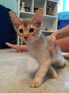 My sister got a kitten. Reddit meet rocket.http://cute-overload.tumblr.com source: http://imgur.com/r/aww/xyvO5Oe