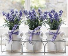 Three little bunches of lavender in white ceramic pots. Tied with a coordinating gingham lavender coloured ribbon in a metal surround. Lavender Cottage, Lavender Blue, Lavender Fields, Lavender Flowers, Purple Flowers, Beautiful Flowers, Lavender Decor, All Things Purple, Shades Of Purple