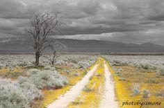 Yellow Road yellow flowers gray grey sky fine art by photobysimone