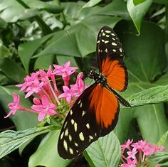 Butterfly Breezes:  Fantasy Flash Fiction by cam