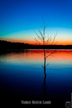Art Print: Sunset and Tree Silhouette overlooking Table Rock Lake in Missouri at Dusk near ShellKnob, MO. Sunset Tree Reflection in Lake by OLD81STUDIOS on Etsy https://www.etsy.com/listing/166698728/art-print-sunset-and-tree-silhouette