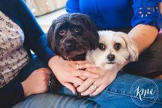 engagement, pets