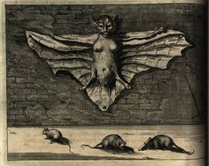 Athanasius Kircher, Bat known as a flying cat