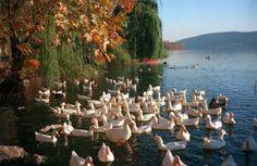 Καστοριά.....Kastoria!