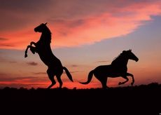 sunset clouds nature animals horses skyscapes shades
