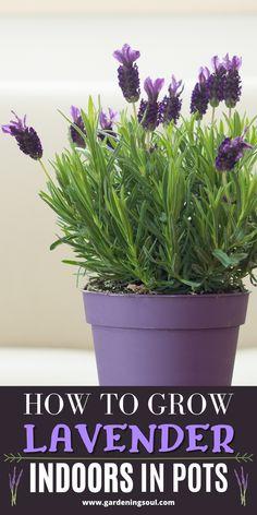 Garden Plants, Indoor Plants, House Plants, Flowering Plants, Potted Plants, Growing Gardens, Growing Plants, Container Plants, Container Gardening