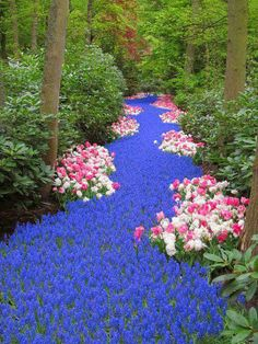 Incredible Pictures: Holland River of Flowers Keukenhof