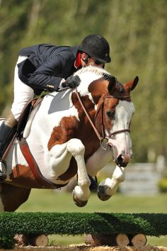 """""""I'm thrilled with the difference I see in my horses. Their coats look beautiful and they're maintaining their weight with less grain. I have several young horses from various management backgrounds and Equine Omega Complete has leveled the playing field. I am confident riding into the show ring knowing that my horses are healthy inside and out thanks to Equine Omega Complete."""" Country Fox Farm Shop Now. www.o3animalhealth.com"""
