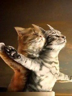 ♥ This is too funny ~!~: Kitty Cats, Flying, Cats And Kittens Humor, Kitty Kitty, Titanic Cats, Funny Kitties, Titanic Kittens, Animal