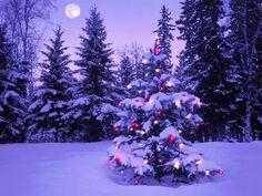 Full moon Christmas