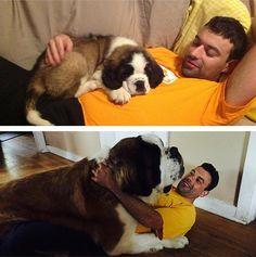 Once a lap dog, always a lap dog.