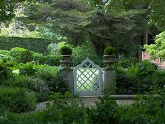 Boxwood and gate
