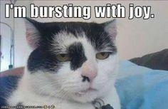 Monday Morning Jokes | ... like this Monday morning! | Jokideo // Funny Pictures & Funny Jokes