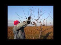 Oszibarack metszes Szerzo Laszlo-val 2 :) - YouTube