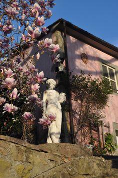 La Donna und die Magnolien Tuscany, Painting, Art, Magnolia, Painting Art, Tuscany Italy, Paintings, Kunst, Paint