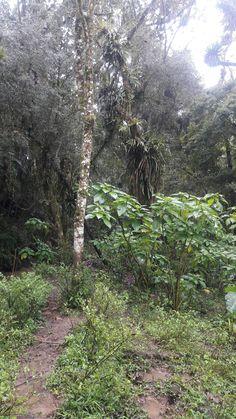 Rain Forest Atlantic Forest - SC / Brazil.