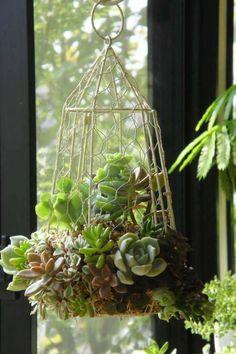 hanging basket cage .. succulents