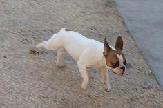 piccola monella in corsa =)
