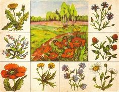 Flower Activities For Kids, Infant Activities, Teaching Plants, Fruit Flowers, Sequencing Activities, Forest Theme, Summer Art, Science And Nature, Flower Crafts