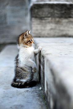 mel-cat:Facing the City  ( via WixMo )  Beautiful !!! O/