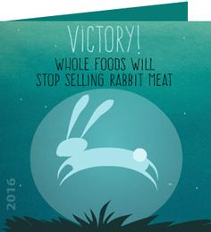Antoinette, success! whole foods will stop selling rabbit meat! Animal advocates are celebrating a huge victory for rabbits with an announcement from Whole Foods that it will stop selling rabbit meat.