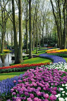 Keukenhof, the most beautiful spring garden, stay in Netherlands