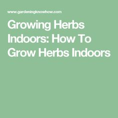 Growing Herbs Indoors: How To Grow Herbs Indoors