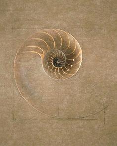 felixinclusis: By David Holt.