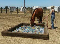 Horse obstacles plastic bottles