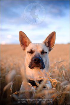 ontario-dog-photographer-harlow sanfilippo-506