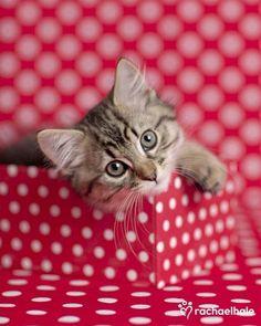 Pretty in polka dot pink