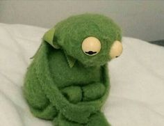 First of all, please look at this tiny, sad Kermit. All fuzzy and forlorn. First of all, please look at this tiny, sad Kermit. All fuzzy and forlorn. Memes Humor, Funny Memes, Hilarious, Ecards Humor, Funny Quotes, Love Memes, Best Memes, Sapo Kermit, Reaction Pictures