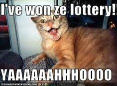 #catsmemes,#catsgifmemes, funny animal pictures, cat memes, #cats, #funnycatsjust like cat, funniest animals, cat fun, cat funny, cat, cats, cat cute, cat stuff,#funny, #funnyanimals, #funnycats