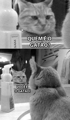 Um Gato!