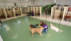 Dog Boarding in Columbus, Ohio   Dog Boarding Accommodations