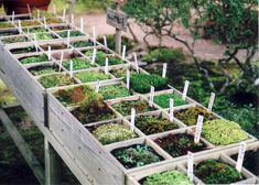 Moss Recipes: How To Grow Moss from Gardens Inspired. What is moss? Moss is big business. Gardeners who want to add moss to their landscapes can purchase products like a moss kit in a carton or even order moss online, but why? You can easily make your own moss given a 'starter' of some native moss, the right conditions and some patience.