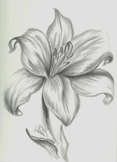 12 Best Pencil Shaded Flowers Images Drawing Flowers Pencil